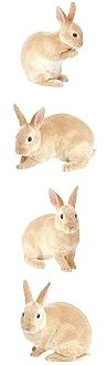 Bunny Rabbits Stickers
