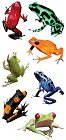 Frogs Stickers